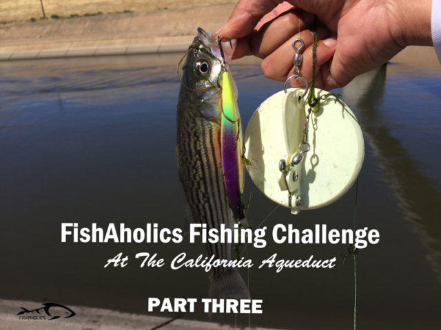 FishAholics Fishing Challenge At The California Aqueduct: Part Three