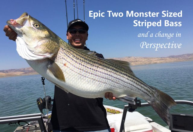 Epic Two Monster Striped Bass And A Change In Perspective