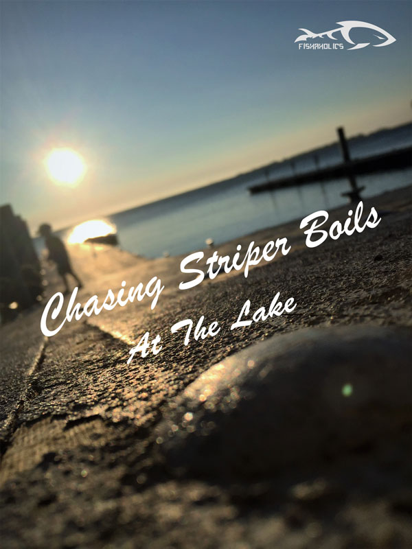 Chasing Striper Boils At The Lake
