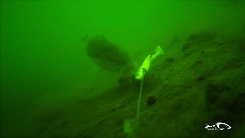 under-water-bass-attack