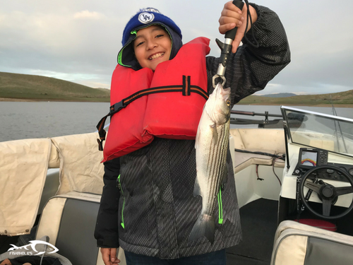 Fishing report san luis reservoir march 17 2018 for San luis reservoir fishing report