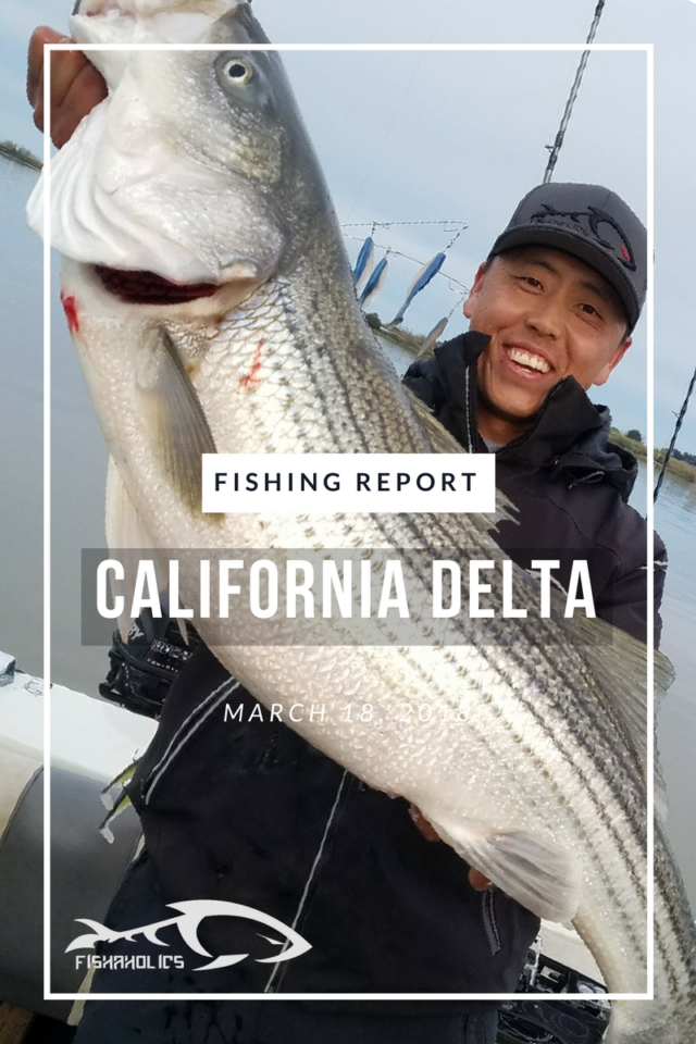 Fishaholics for Fishing report delta