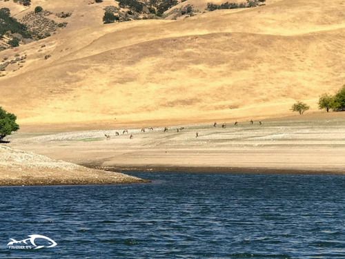 Fishing report san luis reservoir june 19 2018 fishaholics for San luis reservoir fishing