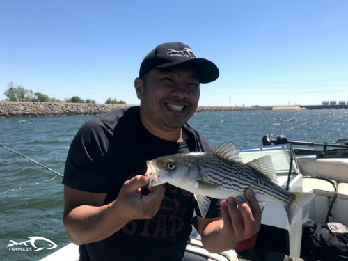 Fishing report o neill forebay june 24 2018 fishaholics for San luis reservoir fishing